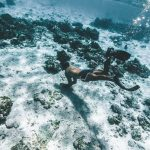 The Best Diving Spots in the Caribbean for Underwater Adventure
